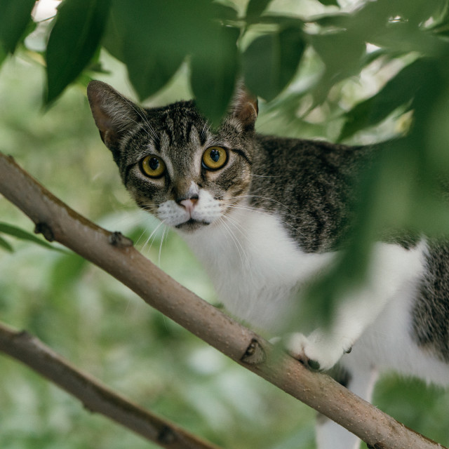 """""""Cat in a Tree"""" stock image"""