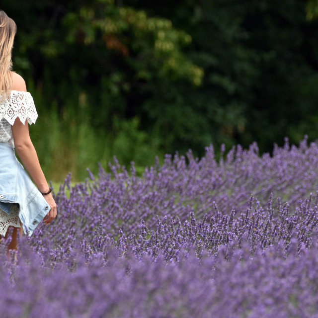 """Walking in a Lavender Field"" stock image"