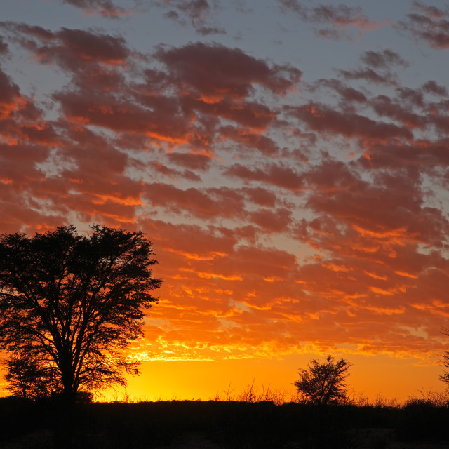 """""""African sunset with silhouetted trees"""" stock image"""
