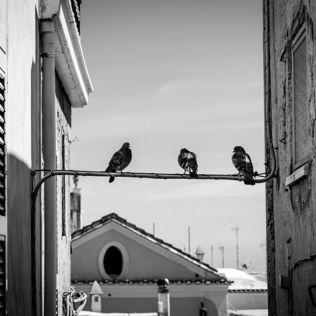 """""""Birds on a Wire"""" stock image"""