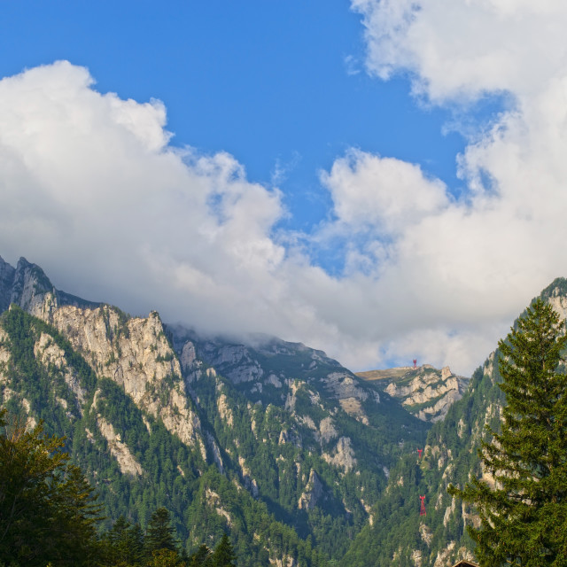 """Alpine summer mountain forest"" stock image"
