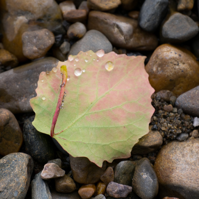 """Leaf on the shore"" stock image"