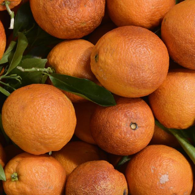 """Oranges."" stock image"