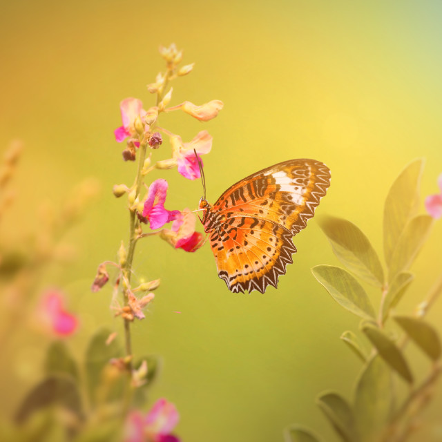 """Vintage photo of butterfly"" stock image"