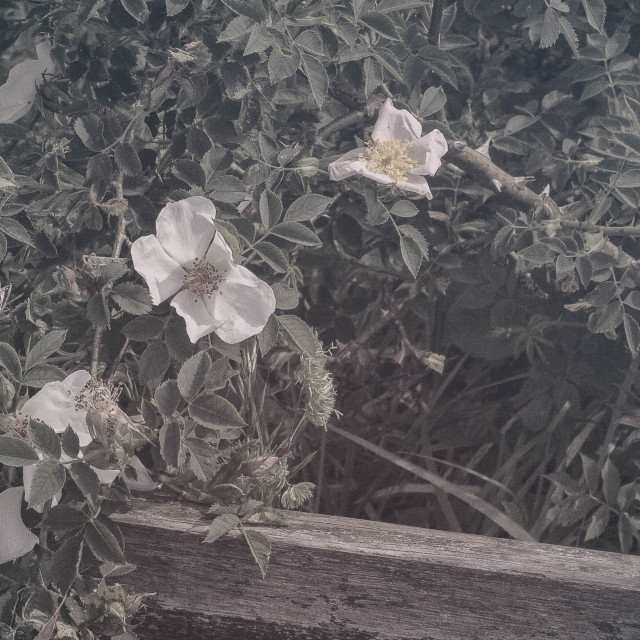 """Muted Wildflowers"" stock image"
