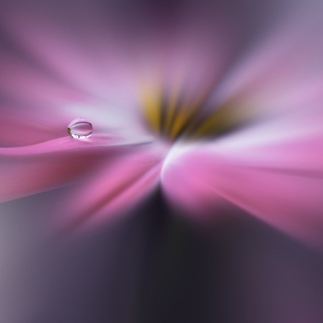 """""""Tranquil abstract closeup art photography.Pastel Flower.Floral fantasy design."""" stock image"""