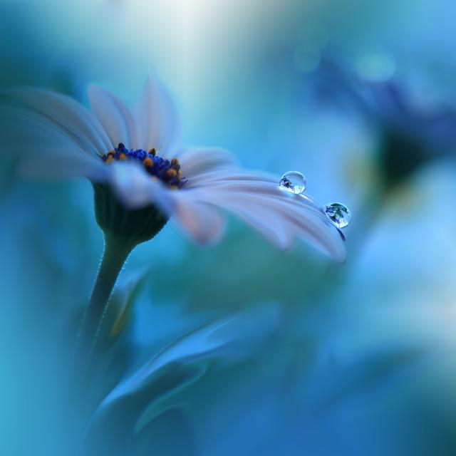"""Gentle romantic artistic image. Soft pastel background blur .Modern art.Close up."" stock image"