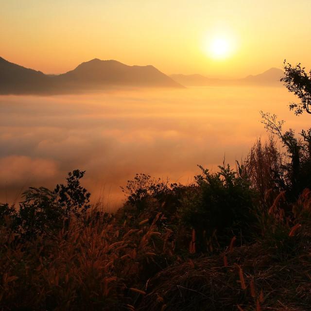"""Sunrise and Mist scenics at Phu Tok"" stock image"