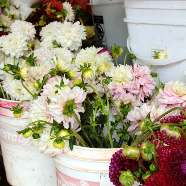 """""""Pike Place Market Flowers"""" stock image"""