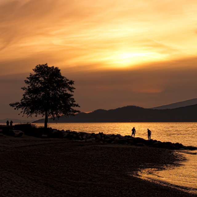 """Silhouette Of Tree on Beach At Sunset"" stock image"