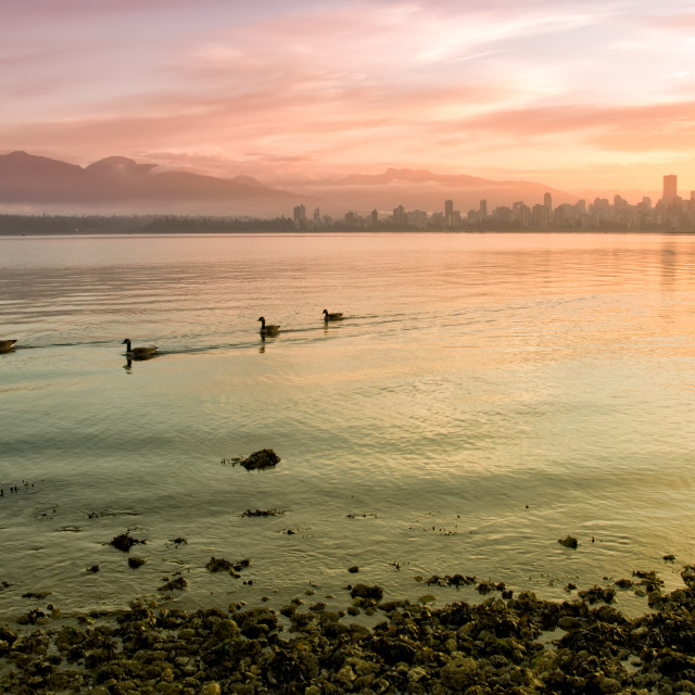 """Colorful City Skyline With Geese Swimming in Foreground"" stock image"