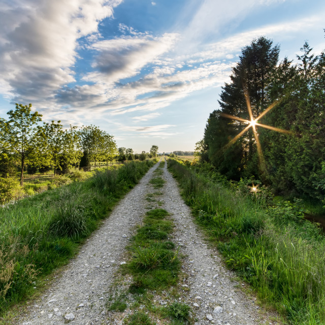"""Stone Overgrown Road Leading to Distance with Sun Star"" stock image"