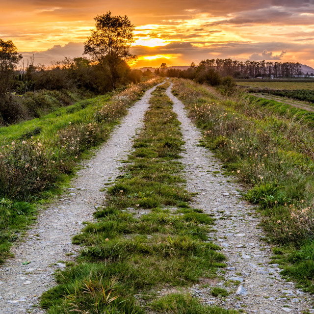 """Dirt Road Path Leading to Sunset"" stock image"