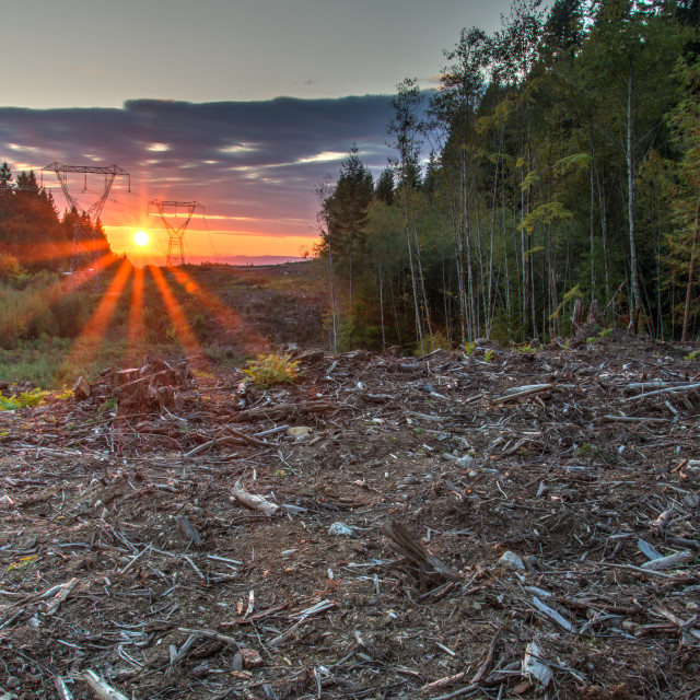 """""""Area Deforested For Power Lines"""" stock image"""