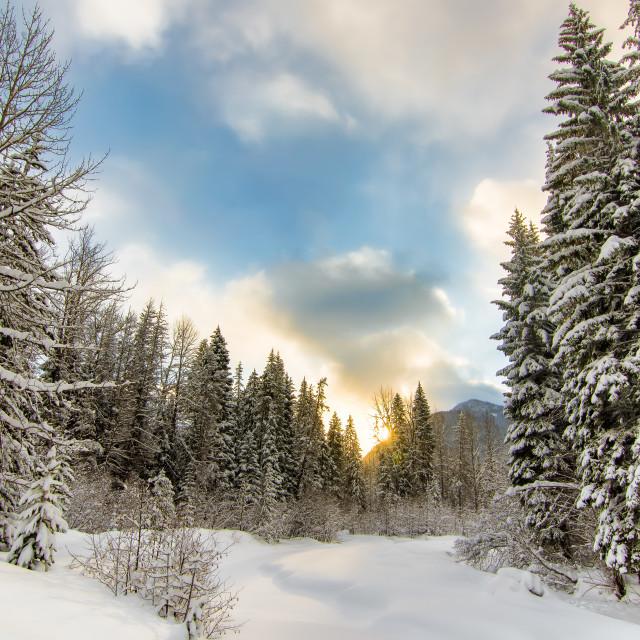 """Sunrise behind a winter wonderland"" stock image"