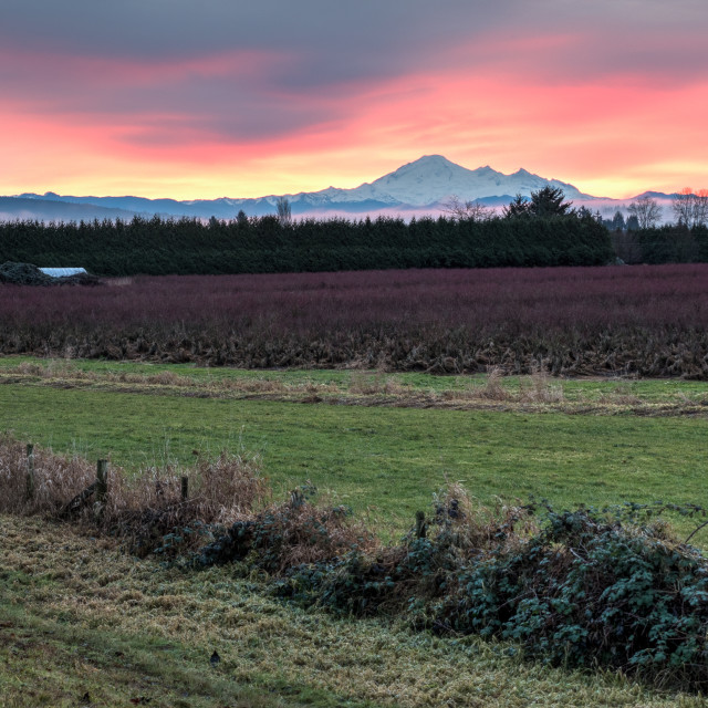 """Mount Baker At Sunset behind field"" stock image"