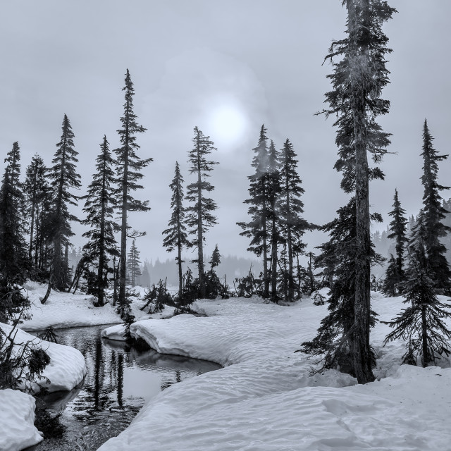 """Winter Black and White with Isolated Trees and Snow"" stock image"