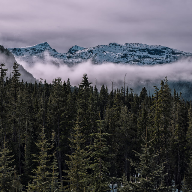 """Mount top with layers of clouds and trees"" stock image"