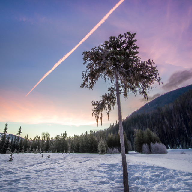 """Lone Tree In Winter At Sunrise"" stock image"