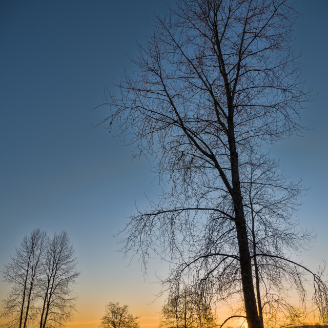 """Leafless Tree Next to River at Sunset"" stock image"