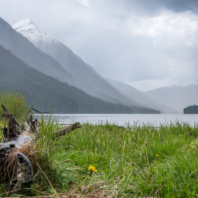 """Log and Grass alone lake sure with distant mountains"" stock image"