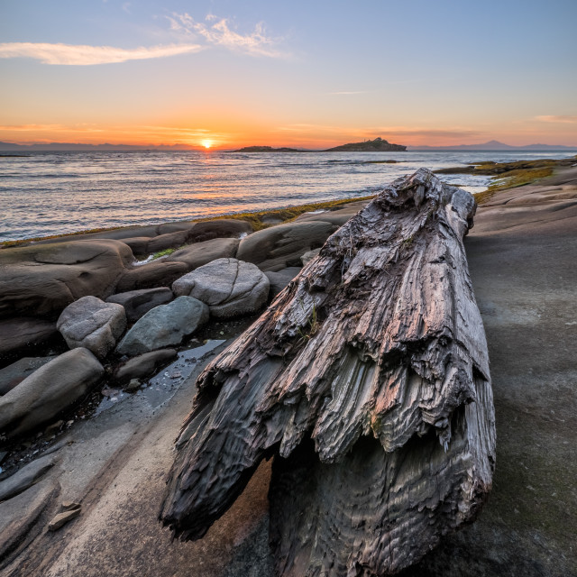 """Large driftwood log on rocks at sunrise"" stock image"