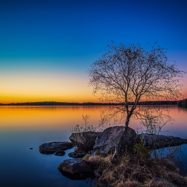 """Lakeside Tree"" stock image"