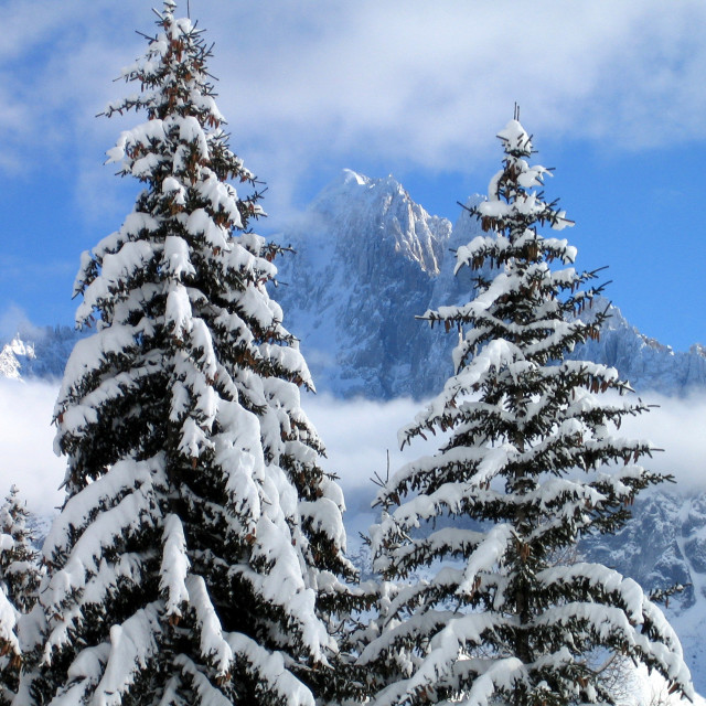 """Snow on the Trees"" stock image"
