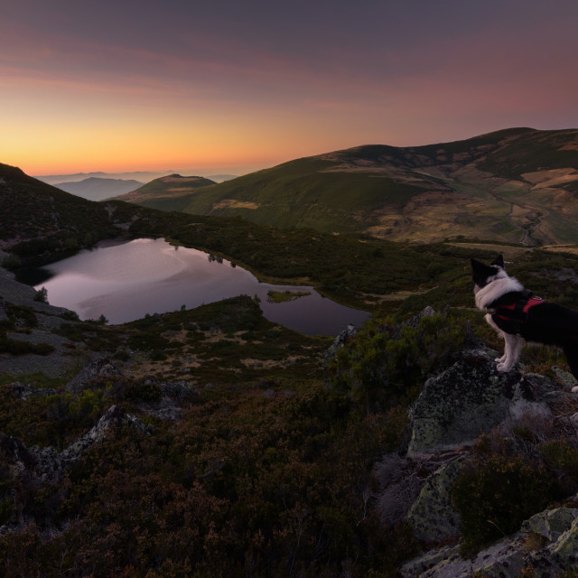 """""""Dog in the mountains"""" stock image"""