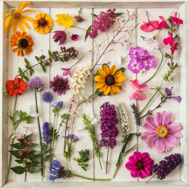 """""""Garden Sampler"""" stock image"""