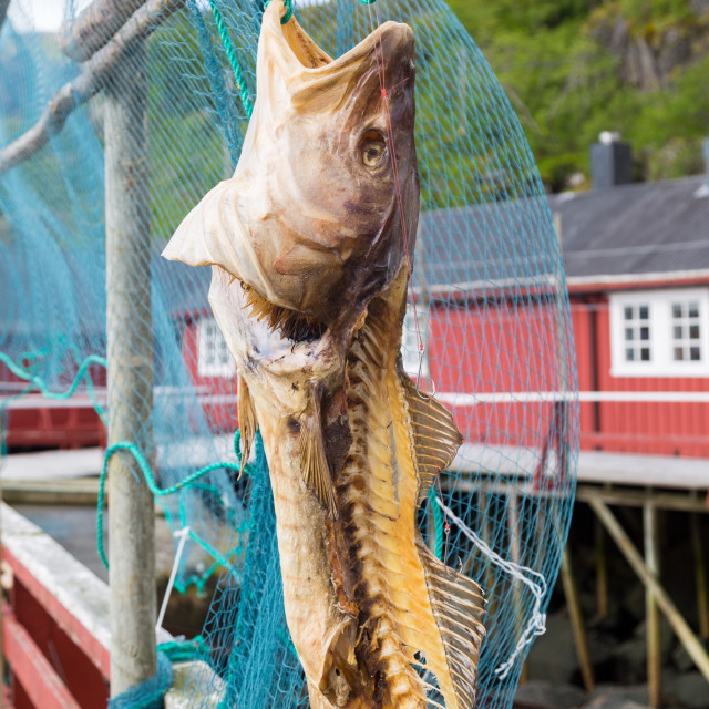 """Cod drier in Norway"" stock image"