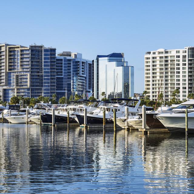 """""""Yachts with city skyline, Sarasota, Florida, USA."""" stock image"""