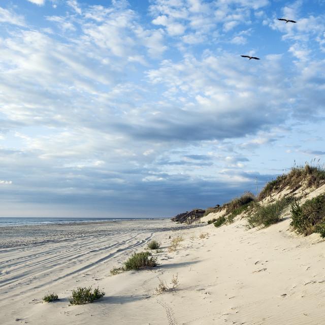 """Beach , Corolla, Outer Banks, North Carolina, USA."" stock image"