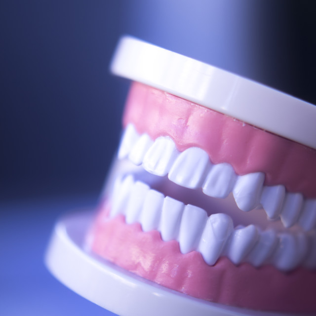 """""""Dentistry teaching tooth model"""" stock image"""