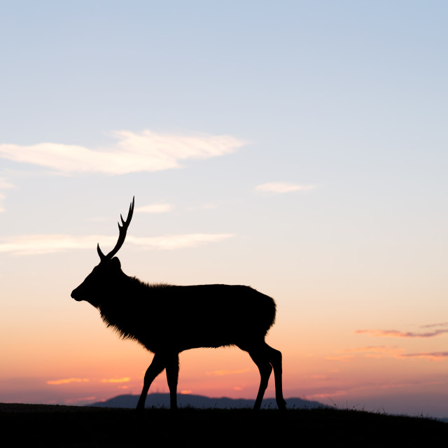 """""""Fallow deer silhuette with a colorful sunset"""" stock image"""
