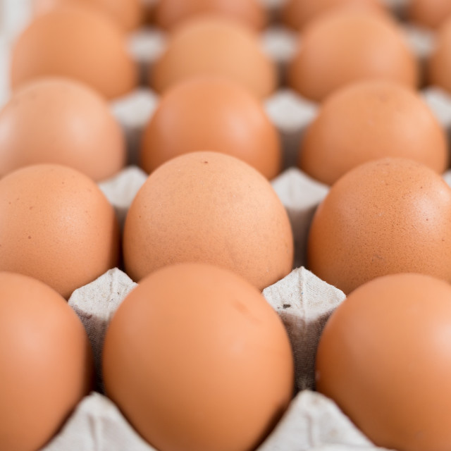 """Fresh chicken egg"" stock image"