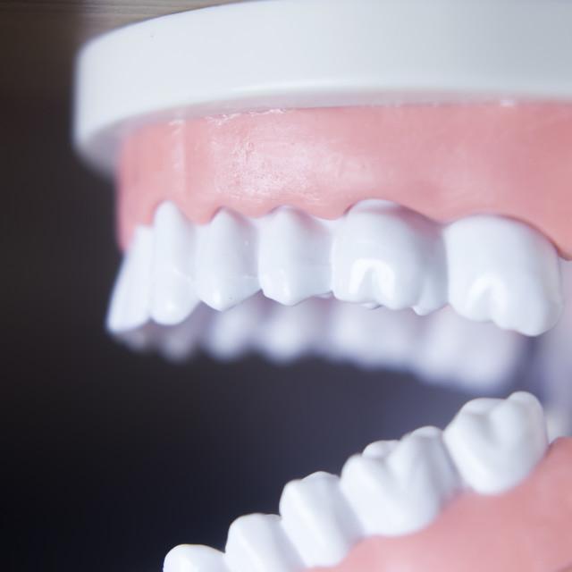 """Dental teeth model"" stock image"