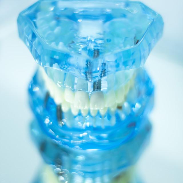 """Dental teeth student model"" stock image"