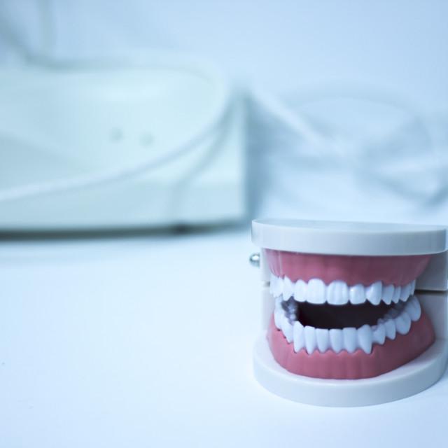 """Dental office teeth model"" stock image"