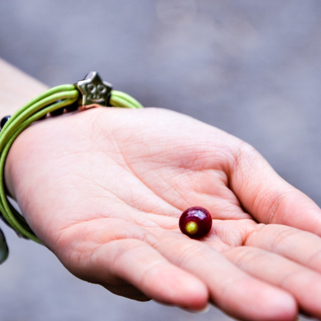 """Seed on the hand"" stock image"