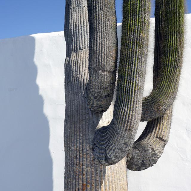 """Cactus 2"" stock image"