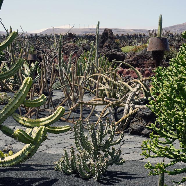 """""""Jardin de Cactus 3"""" stock image"""