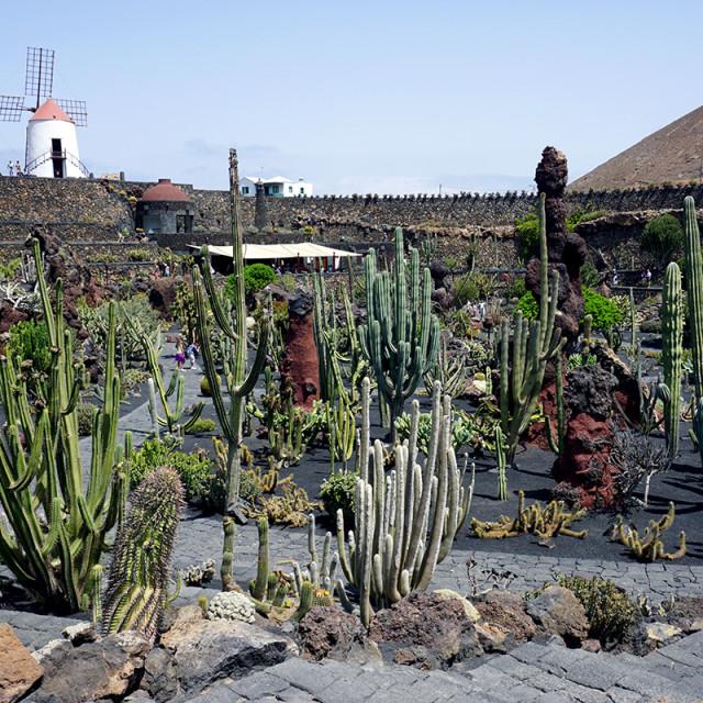 """""""Jardin de Cactus 2"""" stock image"""