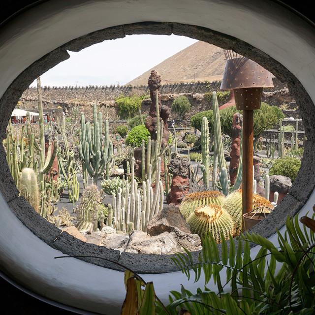 """""""Jardin de Cactus"""" stock image"""