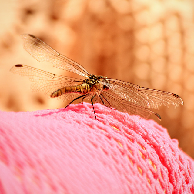 """Dragonfly came by"" stock image"