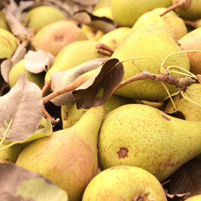 """Fresh pears"" stock image"