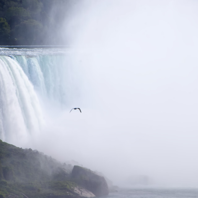 """Bird flying from a waterfall"" stock image"