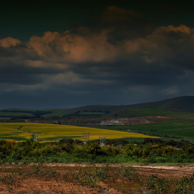 """Canola Fields"" stock image"