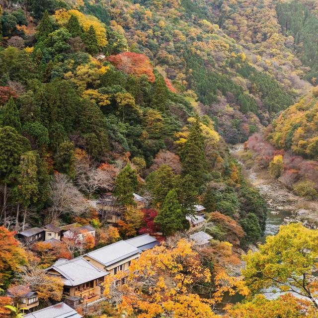 """""""Top view of Arashiyama at fall"""" stock image"""