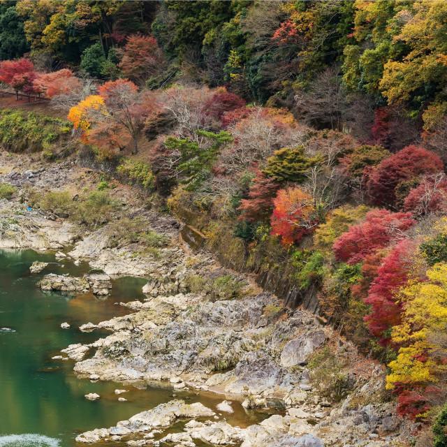 """""""Autumn colors surround Sagano rail, Arashiyama"""" stock image"""